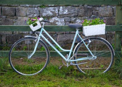 Community Sensory Garden Trim Opening (22)